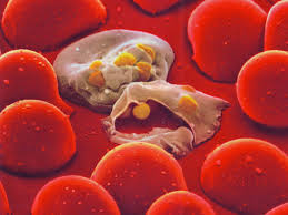 Anti Malarial