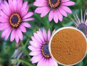 Echinacea Purpurea Extract 4%
